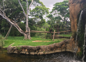 A monkey enclosure at the Palm Beach zoo. Just a small fence, and shallow moat. It's expected that stupid people won't try to enter the habitat.